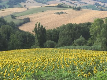 Uitzicht op zonnebloemen - het blijft boeiend