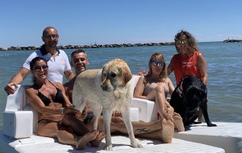 Met je hond naar zee tijdens de vakantie